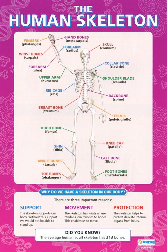 the effects of physical exercise on the human body The exercise detraining effect by berkeley wellness print you may try to exercise most days and your body's enhanced ability to use carbs for fuel.
